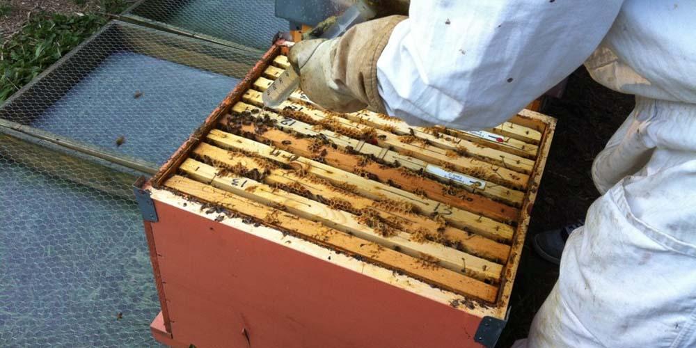varroa treatment