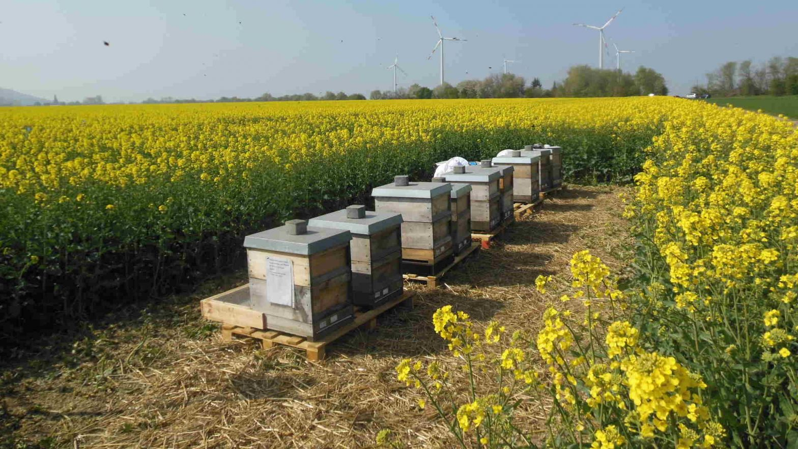 Services for bee related questions in pesticide registration