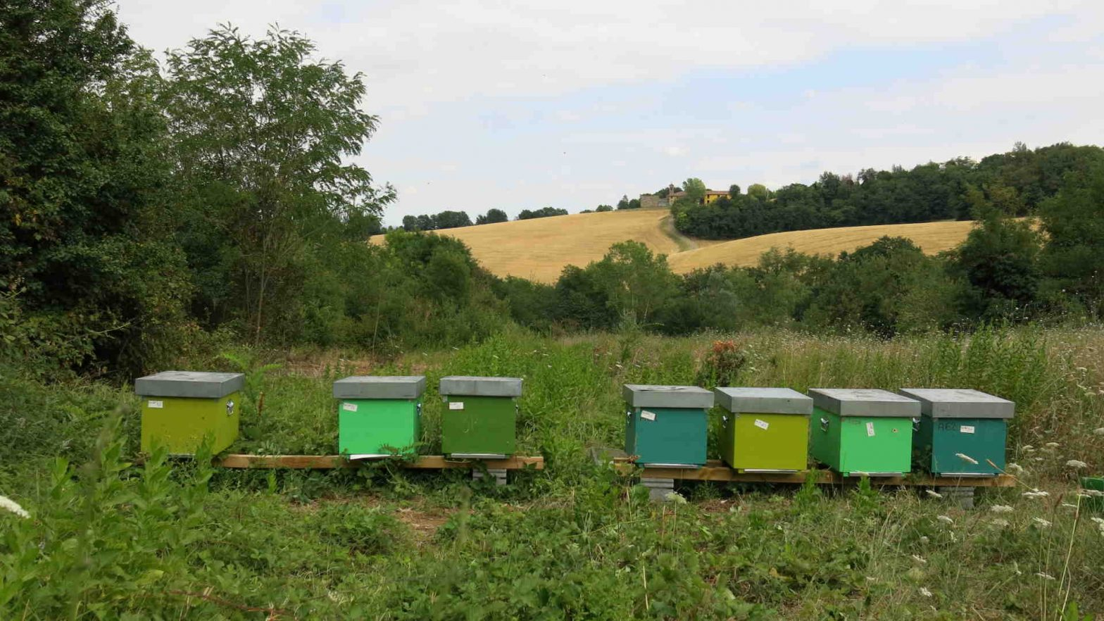 bee conservation, good practices