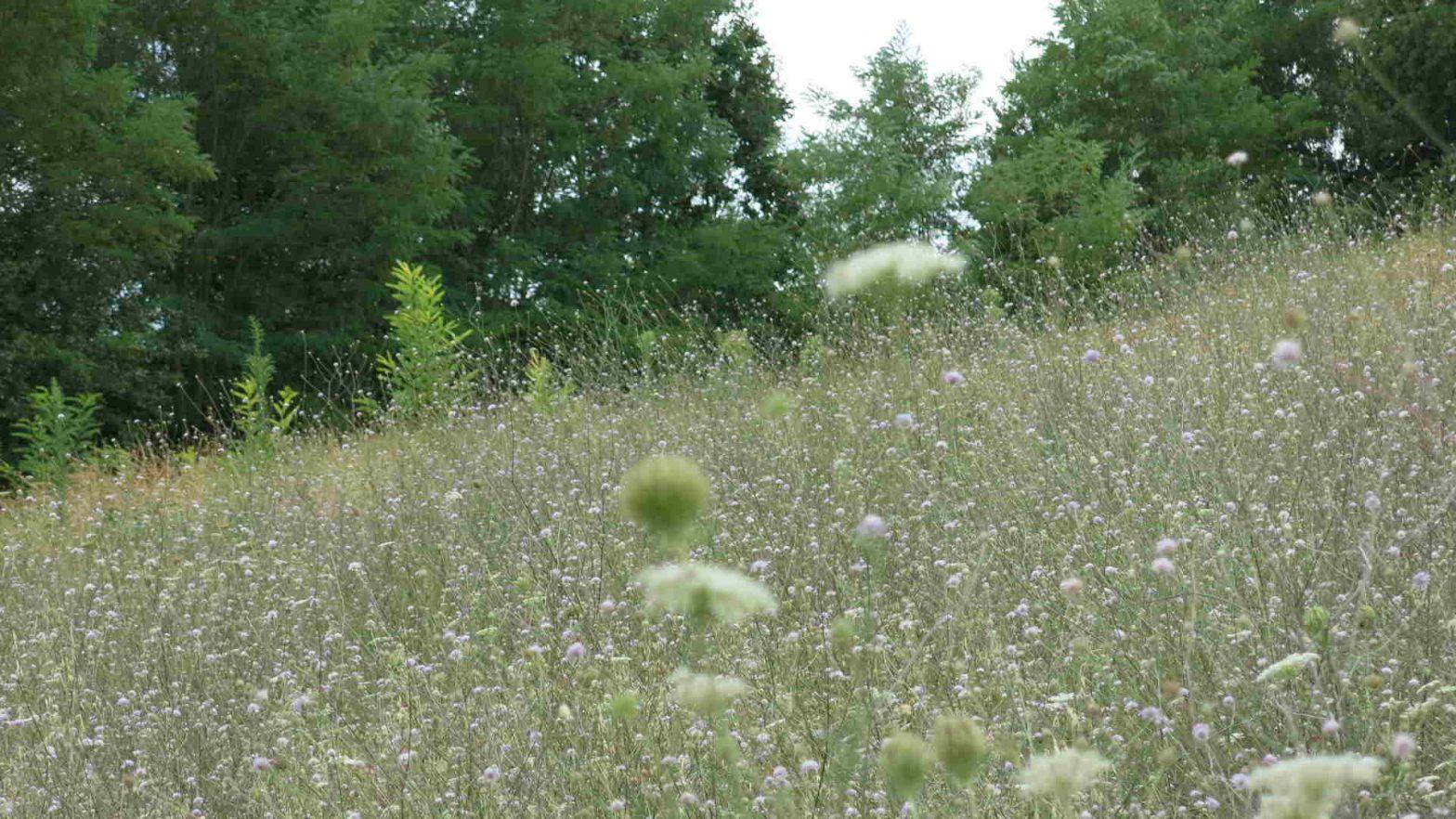 Habitat for bees