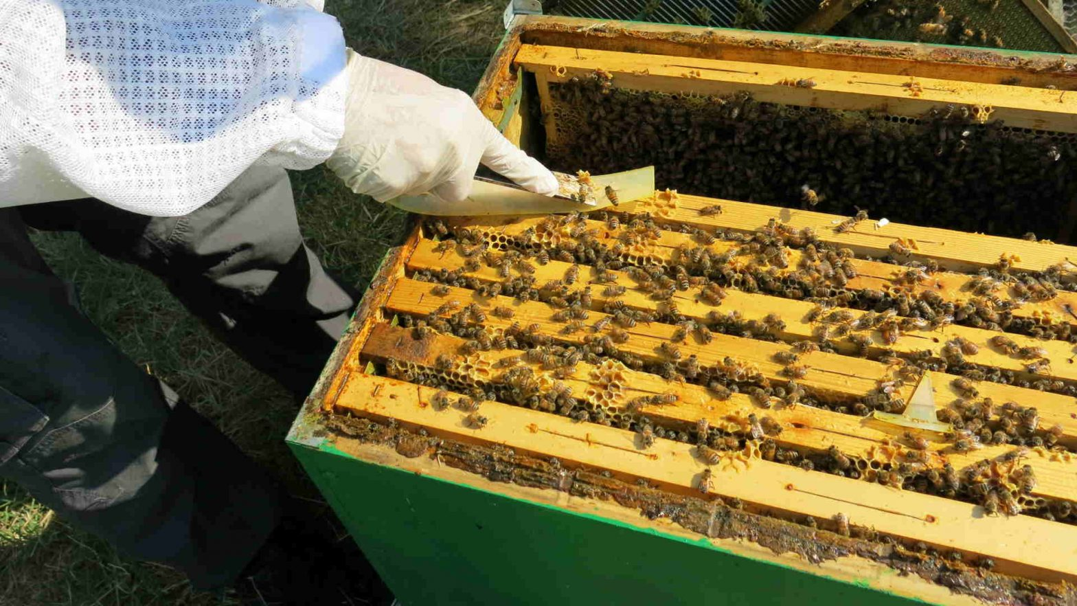 good beekeeping practices, Consulting during the authorisation property