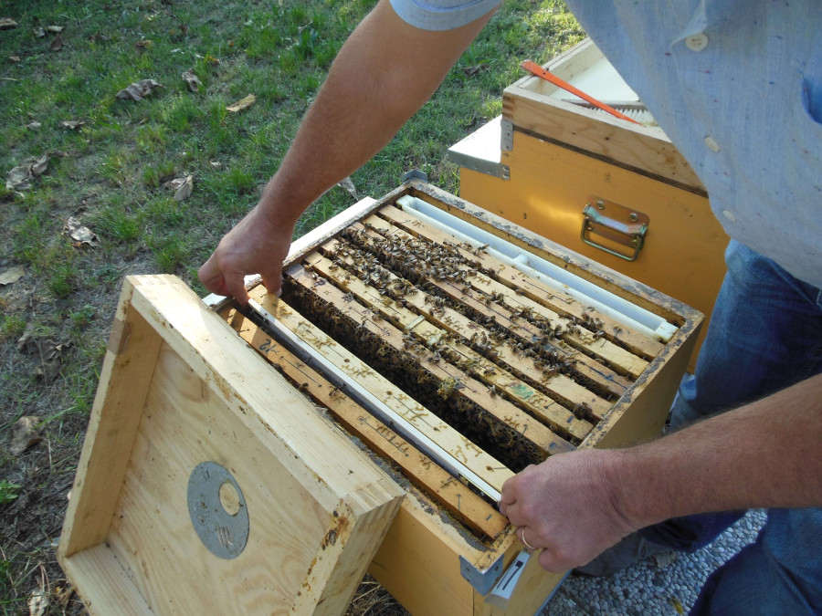 Darwinian beekeeping, Honey bee diseases - Course | BeeSafe