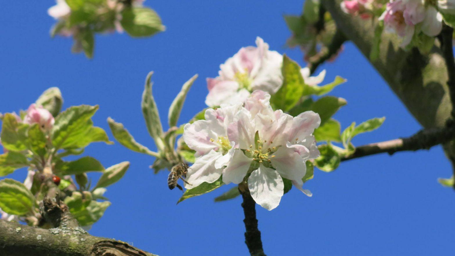 Meta-studies in agriculture | BeeSafe