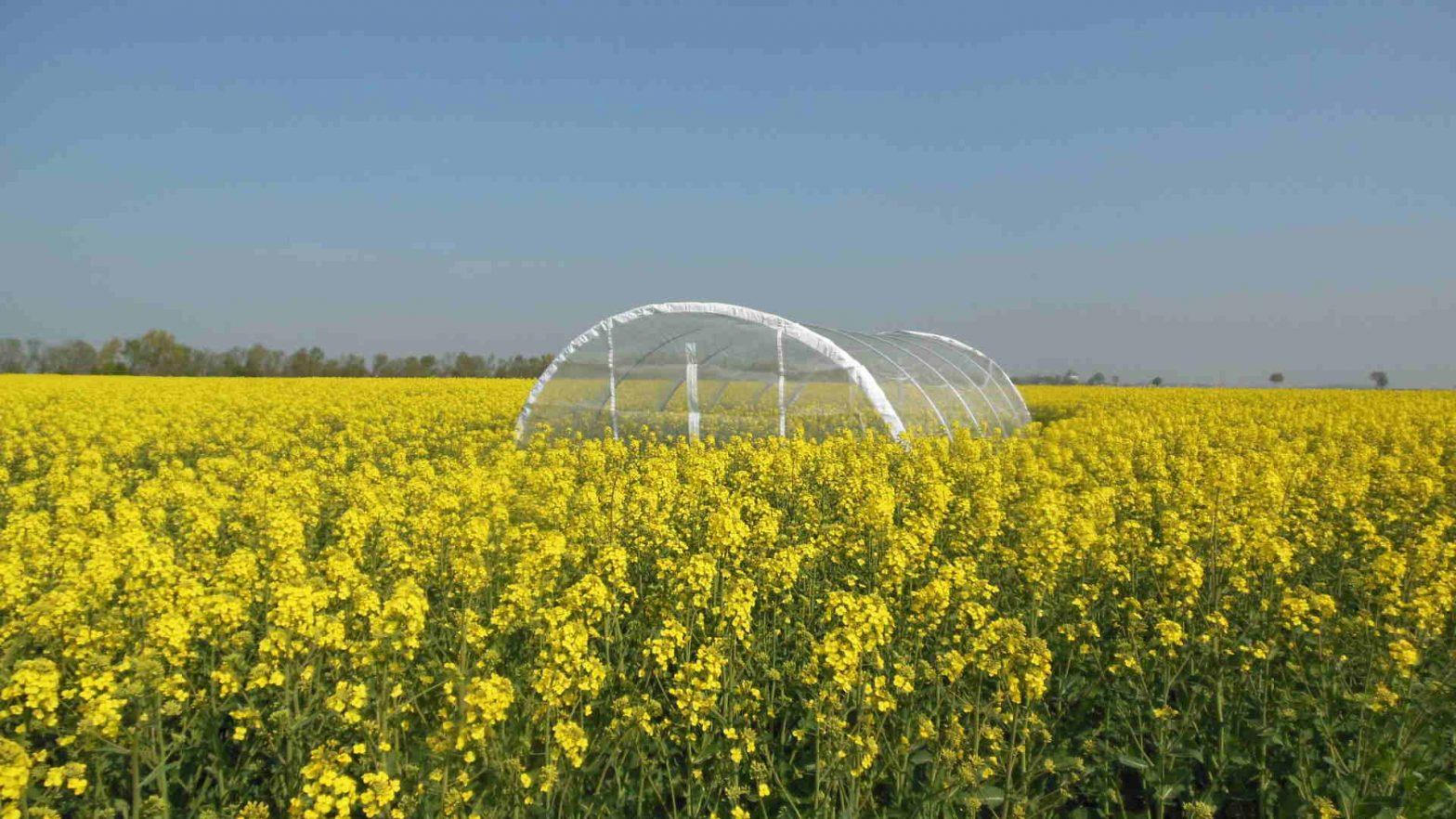 EFSA bee guidance, pesticides, bees, pollinators, Regulation plant protection | BeeSafe