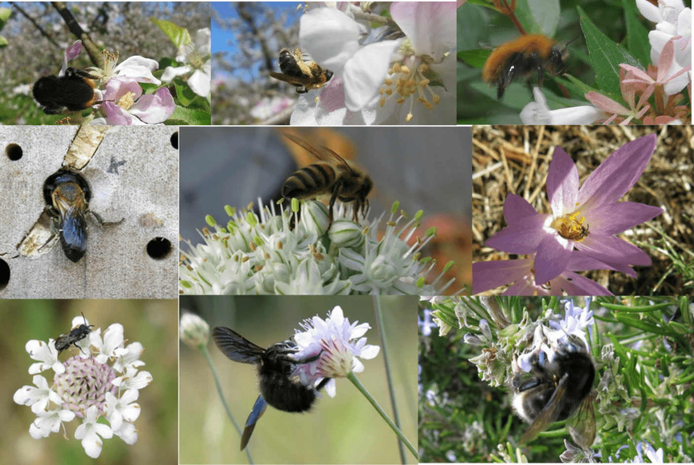uncertainty, Save the bees, Bee Diversity