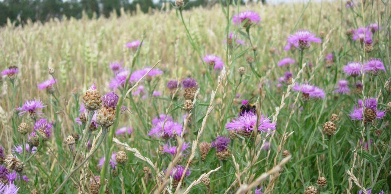 Pollinator agricultural landscape