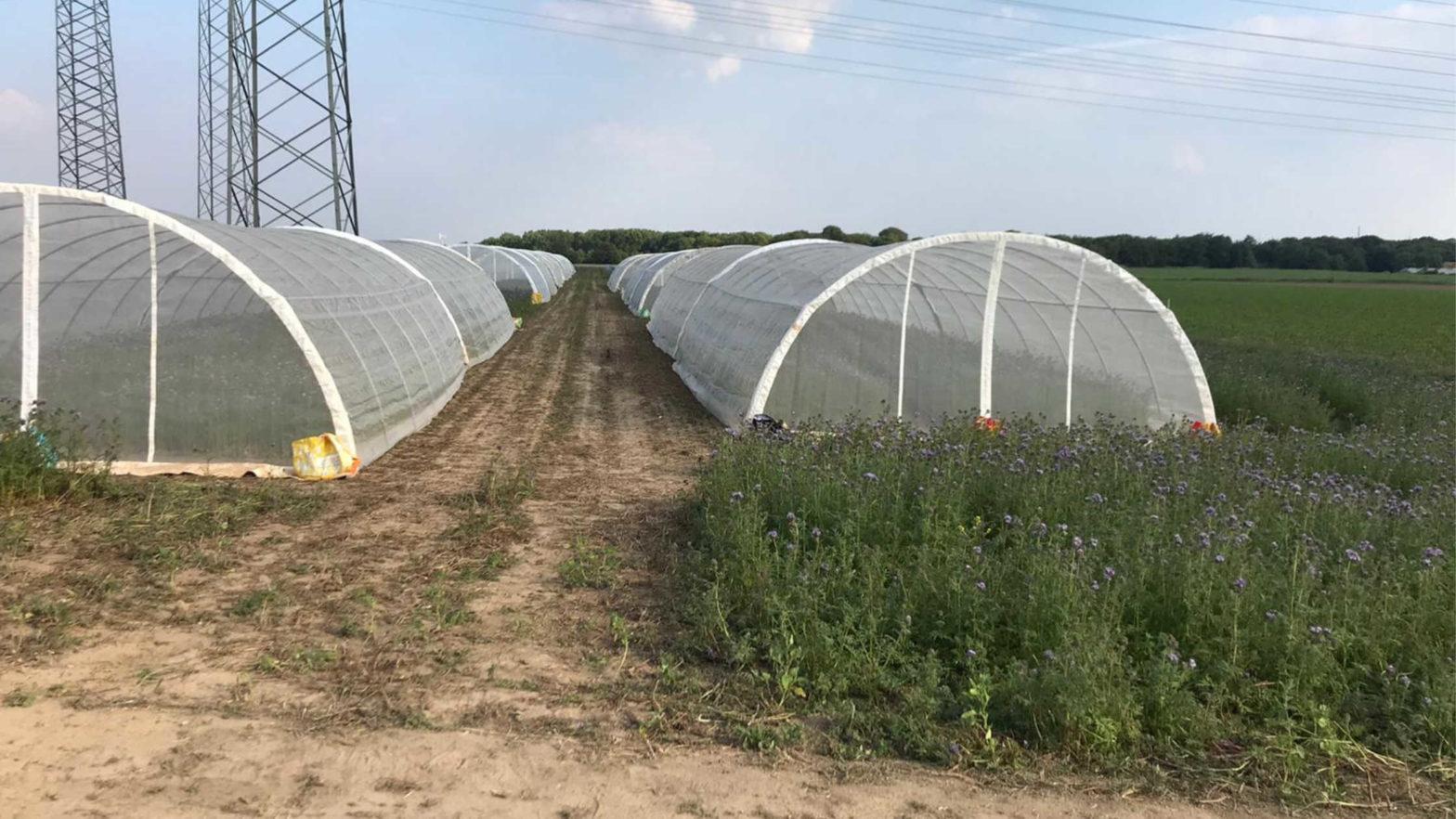 impact of climate change on pollinators