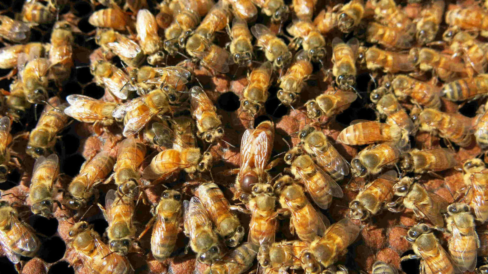 pollination and human health, social bees, climate change