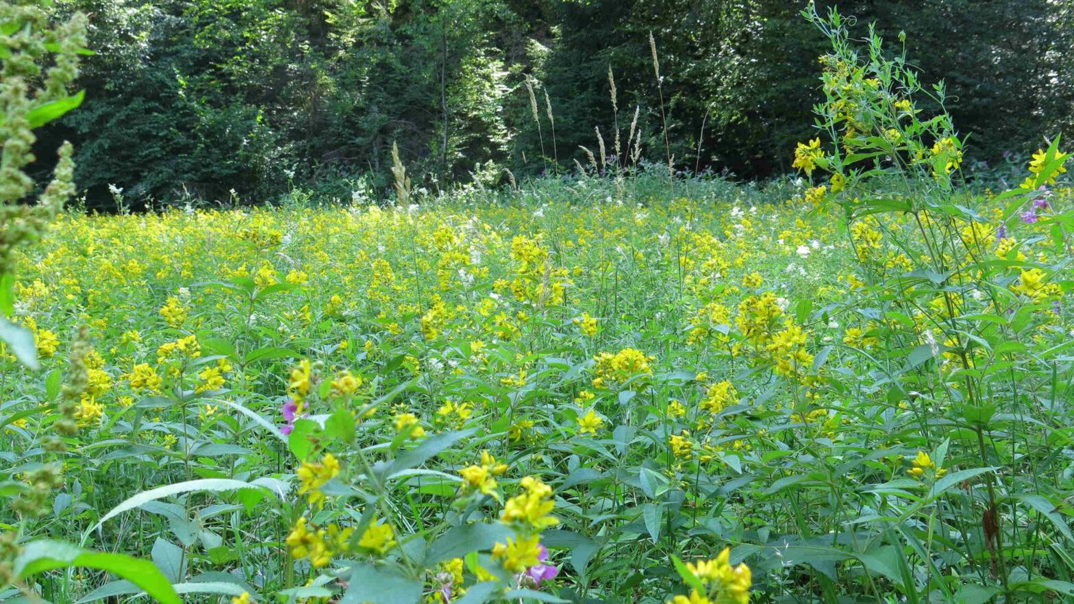 bee habitat, meadow