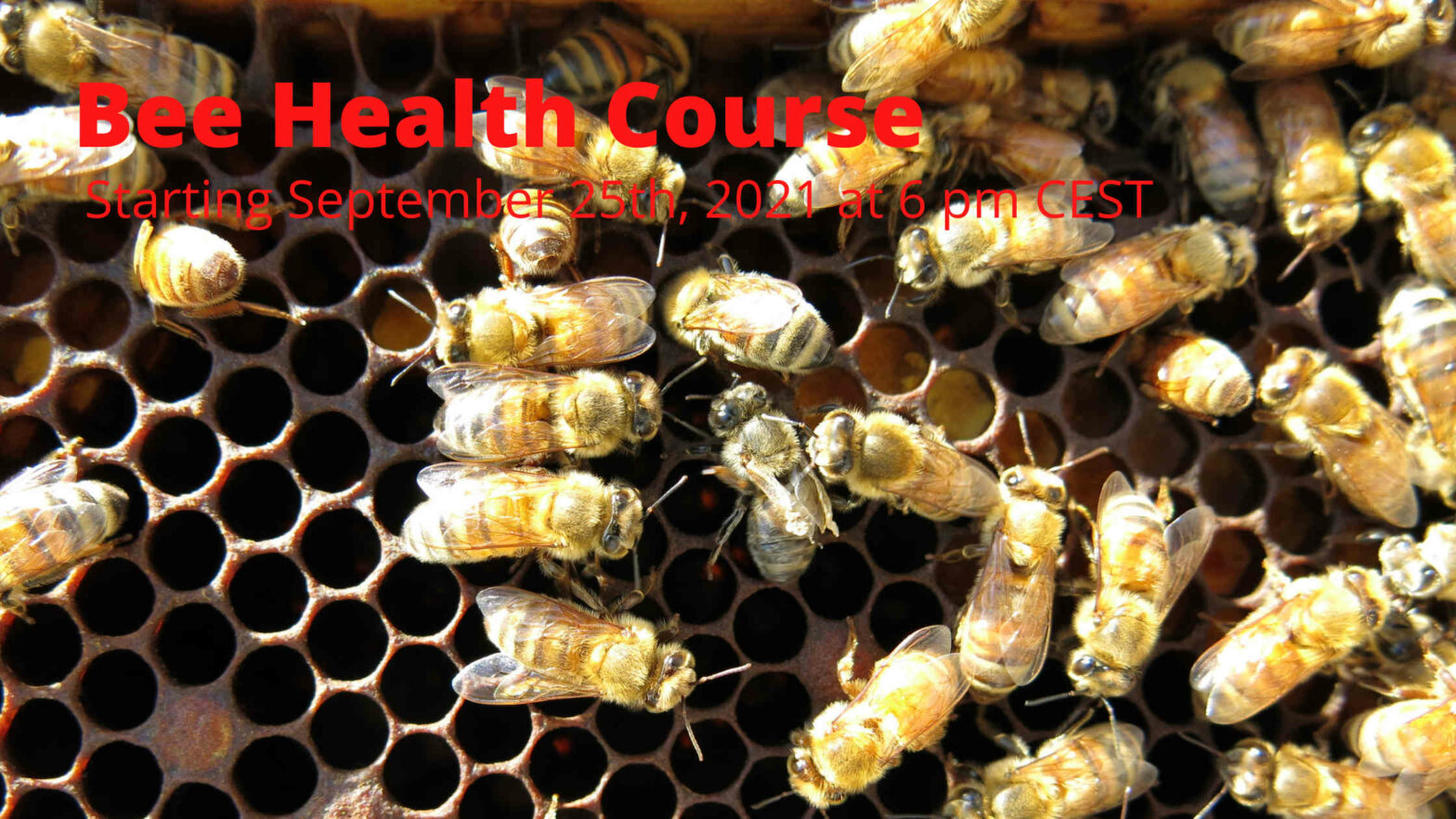 Bee Health Course